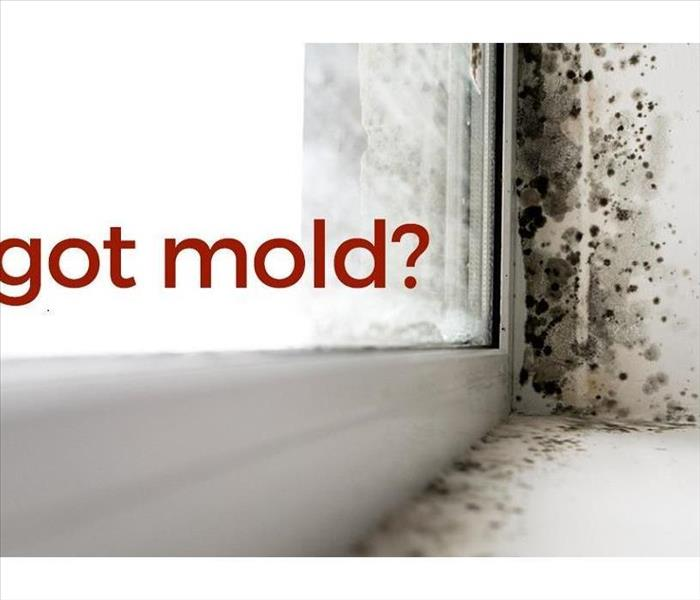 Top 10 Tips To Look For Water Damage And Mold In Buildings