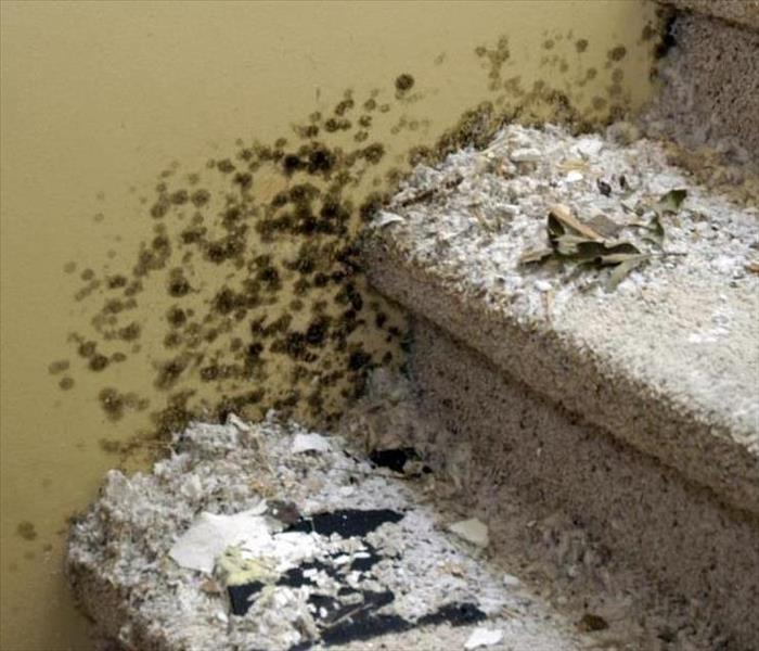 Mold Remediation Does Your Bolingbrook Home or Business Have a Mold Problem?