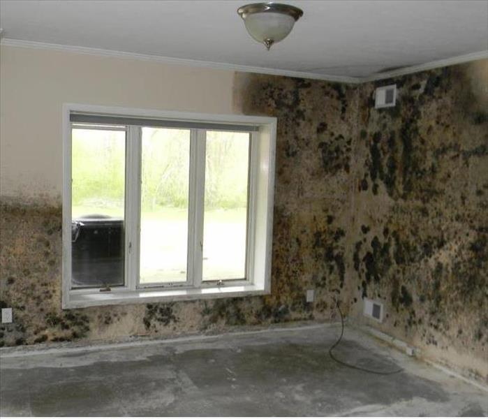 Mold Remediation Does Your Woodridge Home Have a Mold Problem?